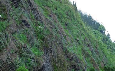 绿化勾花网