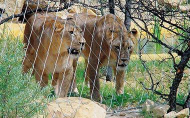 动物园围网