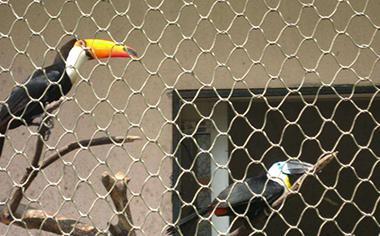鸟语林专用网